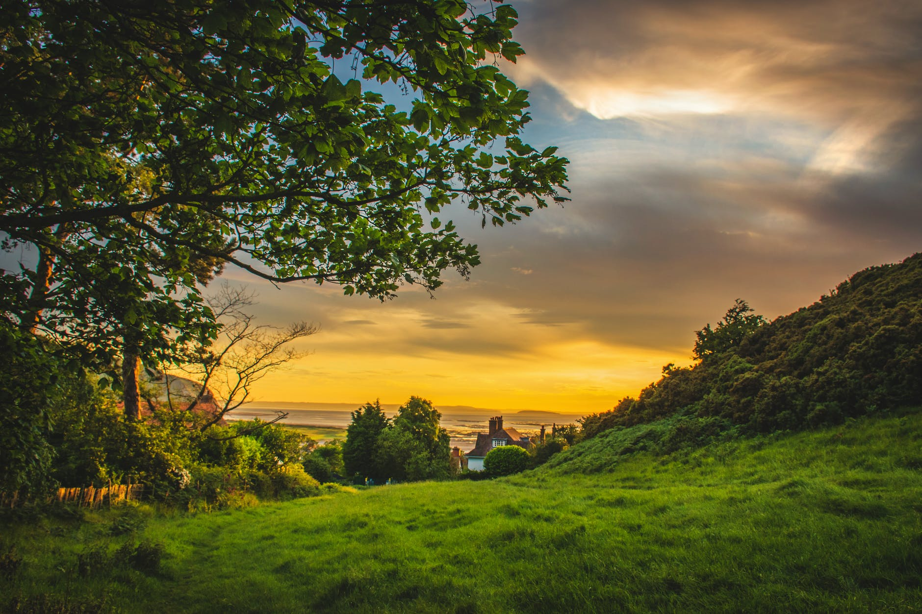green trees under blue and orange sky during sunset